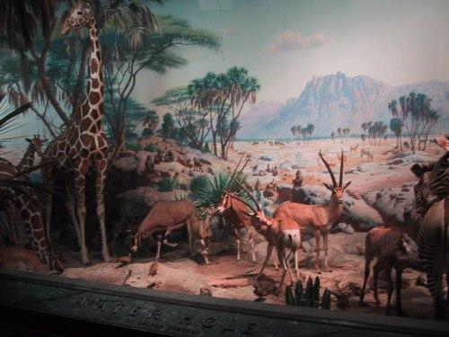 Carl Akeley's Watering Hole Diorama at AMNH